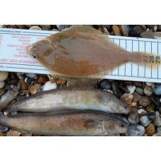 Fish Measure with maff size limits